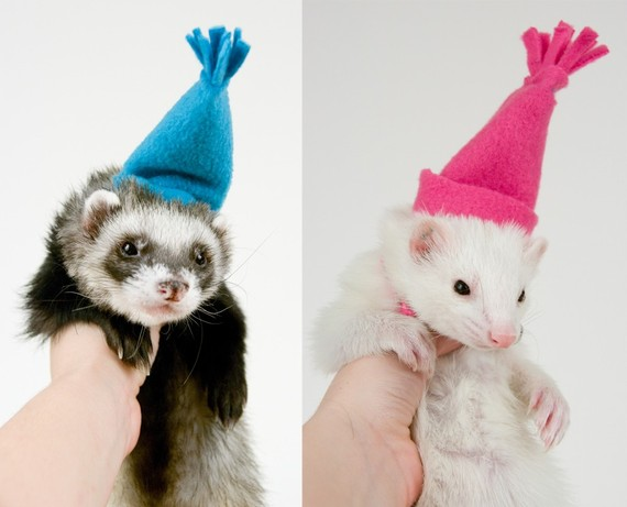 Hatsferrets