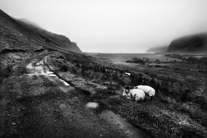 Road to Talisker Bay, Isle of Skye